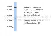 ARP30627_P050 - CD95 / FAS