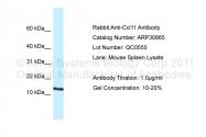 ARP30865_P050 - Eotaxin / CCL11
