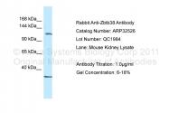 ARP32526_P050 - ZBTB38