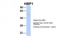ARP32559_P050 - HBP1