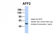 ARP34260_P050 - AFF2 / FMR2