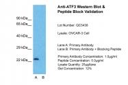 ARP36556_P050 - ATF3