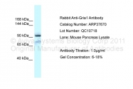 ARP37670_P050 - Glutamate receptor 1 / GLUR1