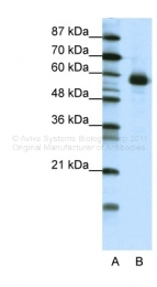 ARP38613_T100 - NFIL3