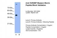 ARP38941_T100 - TARDBP