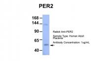 ARP39565_P050 - PER2