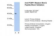 ARP40630_T100 - PCBP1