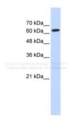 ARP40690_P050 - Ligatin