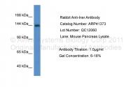 ARP41373_P050 - CD220 / INSR