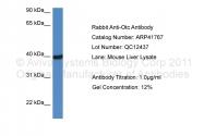 ARP41767_P050 - Ornithine carbamoyltransferase