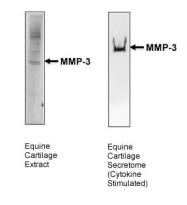 ARP42041_P050 - MMP-3