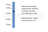 ARP43221_P050 - BFAR / RNF47
