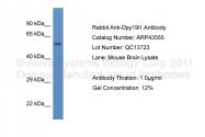 ARP43555_P050 - DPY19L1