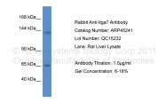 ARP45241_P050 - Integrin alpha-7 / ITGA7
