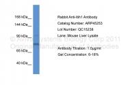 ARP45253_P050 - ITIH1 / IGHEP1
