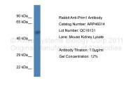 ARP46014_P050 - DNA primase small subunit