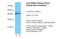 ARP50911_P050 - ARID5A / MRF1