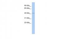 ARP53050_P050 - IFLTD1