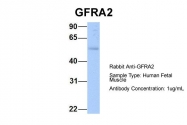 ARP54575_P050 - GFRA2 / GDNFR-beta