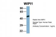 ARP57076_P050 - WIPI-1