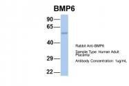 ARP58756_P050 - BMP6