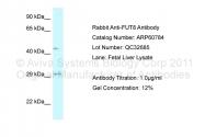 ARP60784_P050 - Fucosyltransferase 8