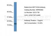 ARP60982_P050 - Histone H3.1