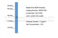 ARP61209_P050 - VASP