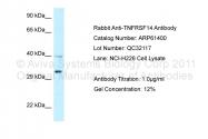 ARP61400_P050 - TNFRSF14 / HVEM