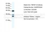 AVARP02040_P050 - CD253 / TRAIL