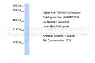 AVARP02052_T100 - TNFRSF18 / GITR