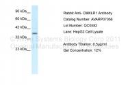 AVARP07056_P050 - Chemokine receptor-like 1