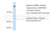 AVARP09051_P050 - SREBF1 / SREBP1