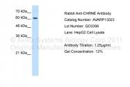 AVARP13023_T100 - Acetylcholine receptor epsilon