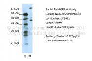 AVARP13048_P050 - Serotonin receptor 7 (HTR7)
