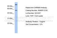 AVARP13100_P050 - Neuronal acetylcholine receptor subunit alpha-6