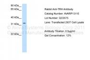 AVARP13110_P050 - Thyrotropin-releasing hormone (TRH)