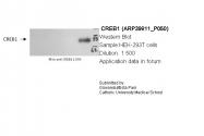 ARP39811_P050 - CREB1