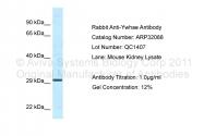 ARP32088_P050 - 14-3-3 protein epsilon