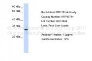 ARP45714_P050 - 11-beta HSD1 / HSD11B1