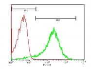 bs-0561R - CD62P / P-Selectin