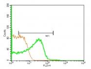 bs-1070R - NPY receptor 1 / NPY1R