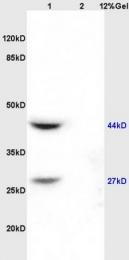 bs-1298R - DIABLO / SMAC