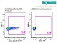 bs-1919R - CD281 / TLR1