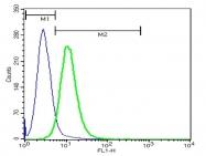 bs-2677R - CD91 / LRP1