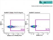 bs-3614R - PPAR-alpha
