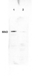 bs-5379R - PLTP