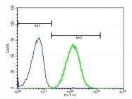 bs-6790R - 14-3-3 protein zeta/delta