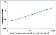 CEK1027 - Human Carbonic Anhydrase 9 ELISA Kit