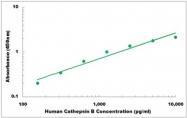 CEK1029 - Human Cathepsin B ELISA Kit